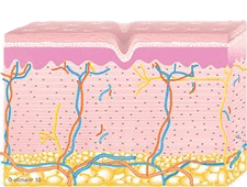 Collagen Remodeling Occurs